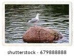 Postcard. Retro. Seagull Stand...