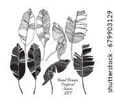 set of tropical leaves  black...   Shutterstock .eps vector #679903129