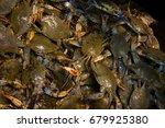 atlantic  chesapeake blue crab. ...   Shutterstock . vector #679925380