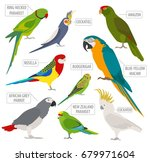 parrot breeds icon set flat... | Shutterstock .eps vector #679971604
