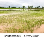 agriculture rice field flooded... | Shutterstock . vector #679978804