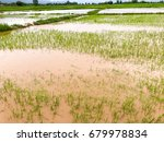 agriculture rice field flooded... | Shutterstock . vector #679978834