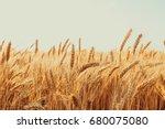 gold wheat field. beautiful... | Shutterstock . vector #680075080