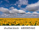 field with sunflowers....   Shutterstock . vector #680085460