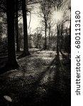 low sun through trees in... | Shutterstock . vector #680113180