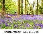 bright bluebells growing on an... | Shutterstock . vector #680113348