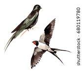 sky bird swallows in a wildlife ... | Shutterstock . vector #680119780