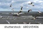 sea bird
