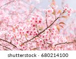 soft blur of pink flowers... | Shutterstock . vector #680214100