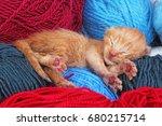 new born baby cat sleeping.... | Shutterstock . vector #680215714