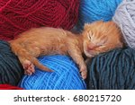 new born baby cat sleeping.... | Shutterstock . vector #680215720