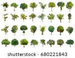 isolated trees on white... | Shutterstock . vector #680221843