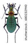 beetle carabus schrencki...   Shutterstock . vector #680232940