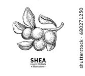 shea butter vector drawing.... | Shutterstock .eps vector #680271250