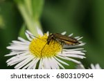 Small photo of Macro view of the side of a green beetle Alleculidae with long mustache seated on a white flower of the caucasian Erigeron