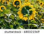 back of the sunflower in... | Shutterstock . vector #680321569