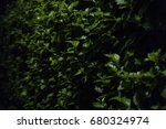 green fence bush with shiny... | Shutterstock . vector #680324974