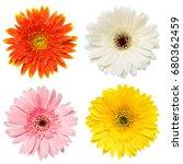 Set Of Colorful Gerbera Flowers ...