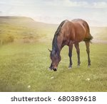 brown  horse grazing in summer... | Shutterstock . vector #680389618