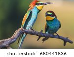 married games exotic birds... | Shutterstock . vector #680441836