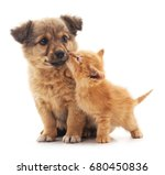 Stock photo puppy and kitten isolated on white background 680450836