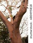 Small photo of Sycamore, Platan, plane tree