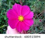 Beautiful Pink Purple Flower...