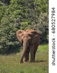 Small photo of African elephant.