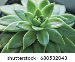 succulent  succulent flower | Shutterstock . vector #680532043