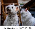 Stock photo cat and dog 680595178