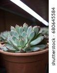 close up rectangular... | Shutterstock . vector #680645584