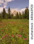 Small photo of A meadow of wild flowers with Gusty Peak Mountain in the background, Kananaskis, Alberta