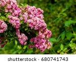 hybrid tea roses. tea rose. a... | Shutterstock . vector #680741743