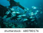 a school of silver fish on ship ... | Shutterstock . vector #680780176