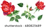 wildflower rose flower in a... | Shutterstock . vector #680825689