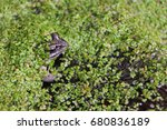 frog in the swamp among a... | Shutterstock . vector #680836189