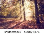 morning in the woods  newcastle ... | Shutterstock . vector #680897578