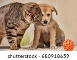 Stock photo cat and puppy 680918659