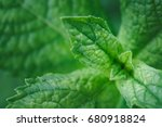 close up of mint leaves growing ... | Shutterstock . vector #680918824