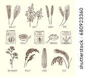 vector set of different cereals.... | Shutterstock .eps vector #680923360
