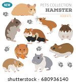 Stock vector hamster breeds icon set flat style isolated on white pet rodents collection create own 680936140