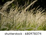 long grass swaying in a field | Shutterstock . vector #680978374