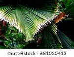 palm leaf | Shutterstock . vector #681020413