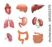 realistic human organs set... | Shutterstock .eps vector #681031570