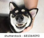 Stock photo happy face of shiba 681064093