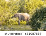 elephant stops to eat... | Shutterstock . vector #681087889