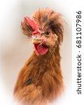 chicken   Shutterstock . vector #681107986