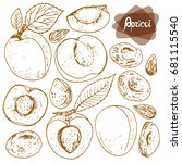 hand drawn sketch style set of... | Shutterstock .eps vector #681115540