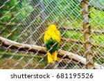Golden Parakeet Standing On A...