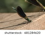 Odonata  Kiz Bocegi